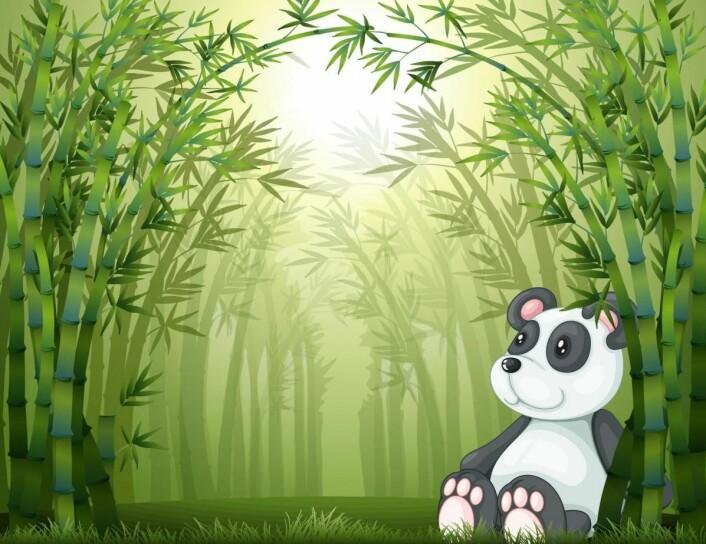Mange forvirrende påstander om bambusens egenskaper (Yay Images)