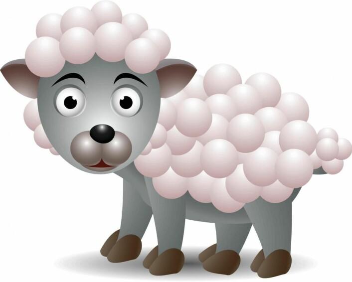 Fleece kan være laget av mange ulike materialer, også ull (Yay Images)