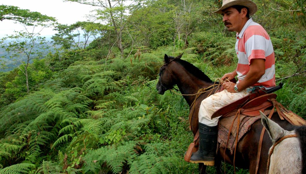 En del av plantene skal til Carara National Park i Costa Rica